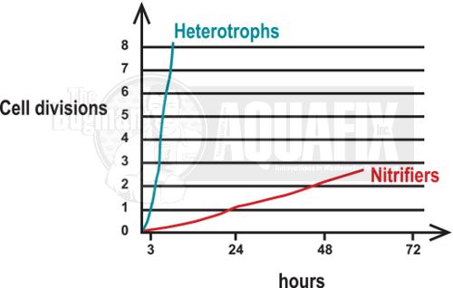 nitrifier_growth_graph_ammonia1