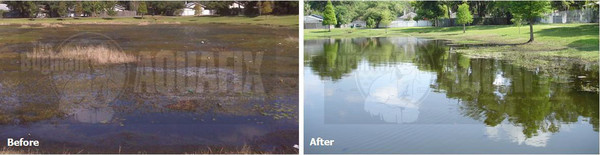 pondzilla-before-after