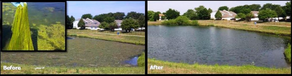 Lowering Levels of Total Coliform in Wastewater Lagoons and Decorative Ponds