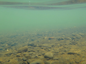 Transparent Planktonic Algae Raises Lagoon pH