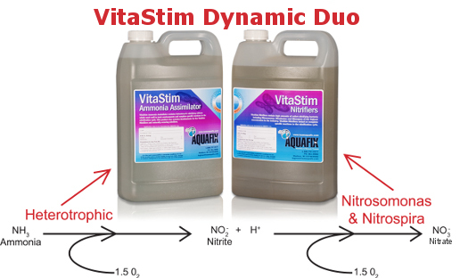nitrification process using VitaStim Dynamic Duo