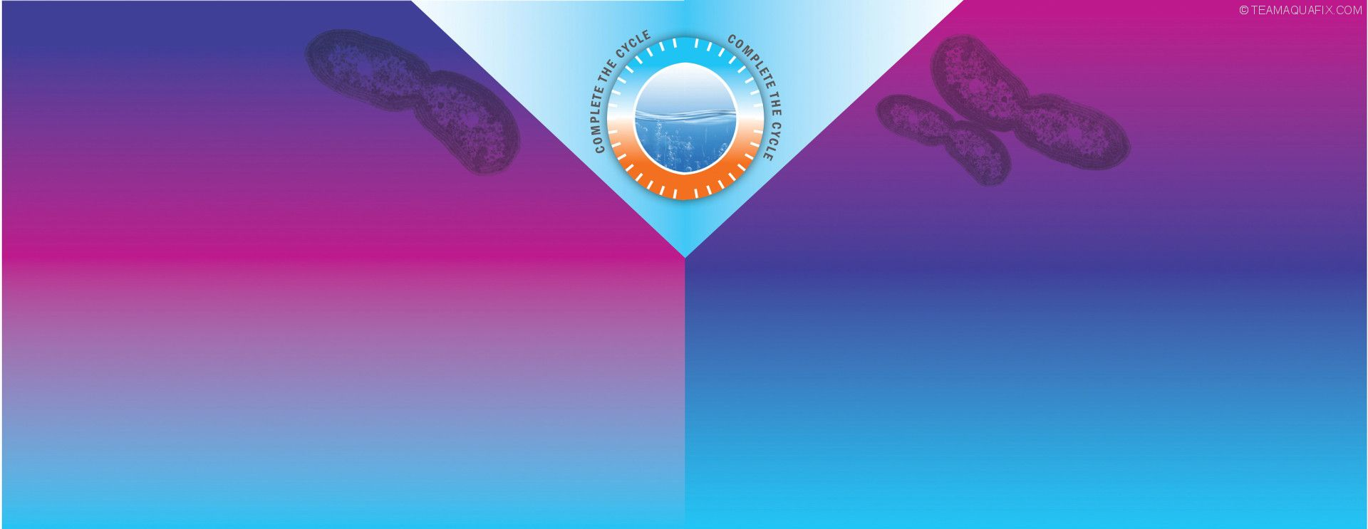 VitaStim-Nitrifiers-Ammonia-Assimilators-Background