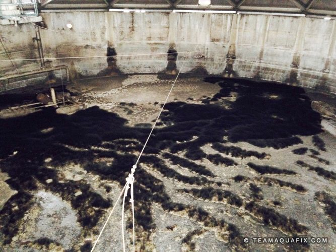 fungus-in-wastewater-basin