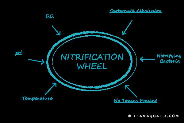 Excerpt from 2018 Nitrification Webinar