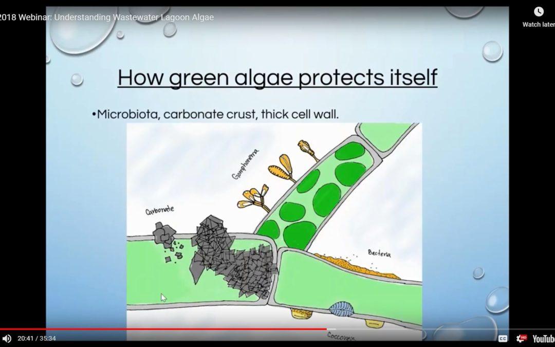 Understanding Wastewater Lagoon Algae – 2018 Webinar