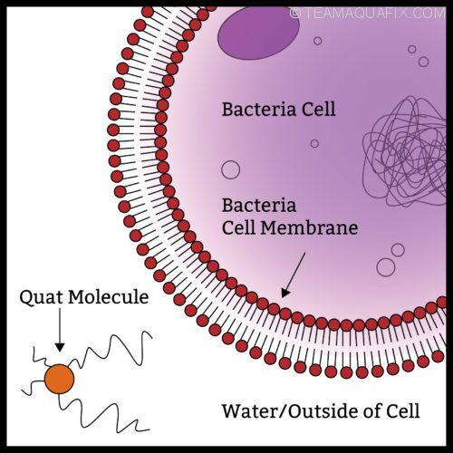 before-quat-toxicity