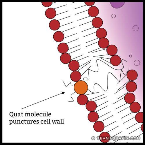 quat-biocide-puncture