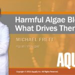 Webinar: Harmful Algae Blooms – What Drives Them