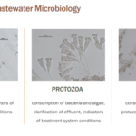 Webinar: Protozoa, Metazoa, and Building Good Floc