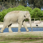 Sludge Reduction in Elephant Watering Hole – Unique Application
