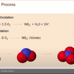 Webinar: Unlock Nitrification & Remove Ammonia